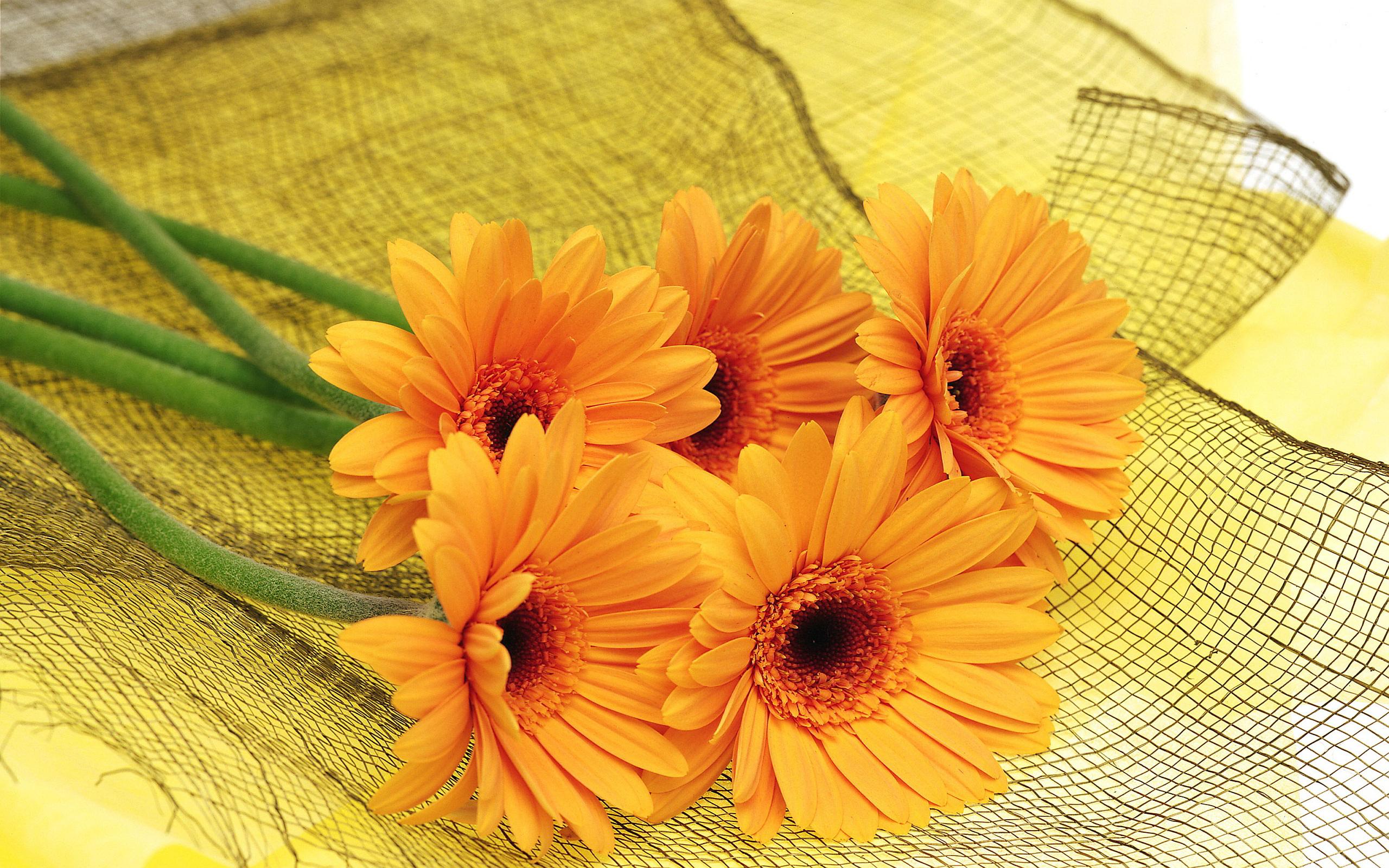 1plantes fleurs orange - fo