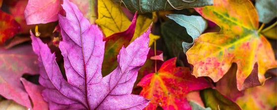 feuilles et pages connexes facebook
