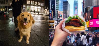 Focus sur 2 Instagramers d'escapades : l'un gourmand et l'autre… canin !